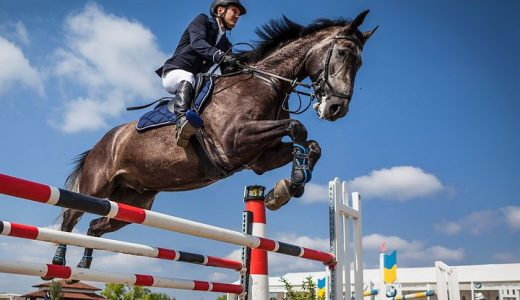 Top 3 Horse Jump Designs to build a Course
